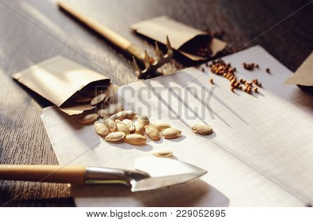 spring garden preparation for sowing vegetable seeds and planning. Pumpkin, coriander with labels, peat pots and tools on note book. Seasonal garden work. stock photo