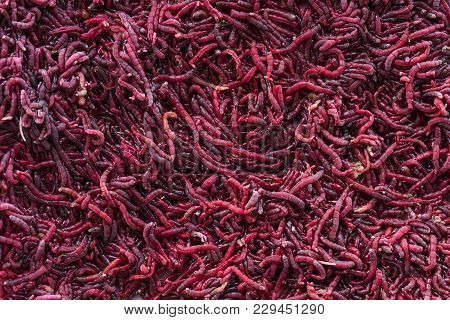 background of red mosquito larvae biology blood stock photo