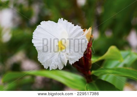 White tropical flower on green branch with buds. White flower on green branch. White orchid closeup. Blooming tropical garden. Tropical blossom in greenery. Exotic floral decor. Orchid macrophoto stock photo