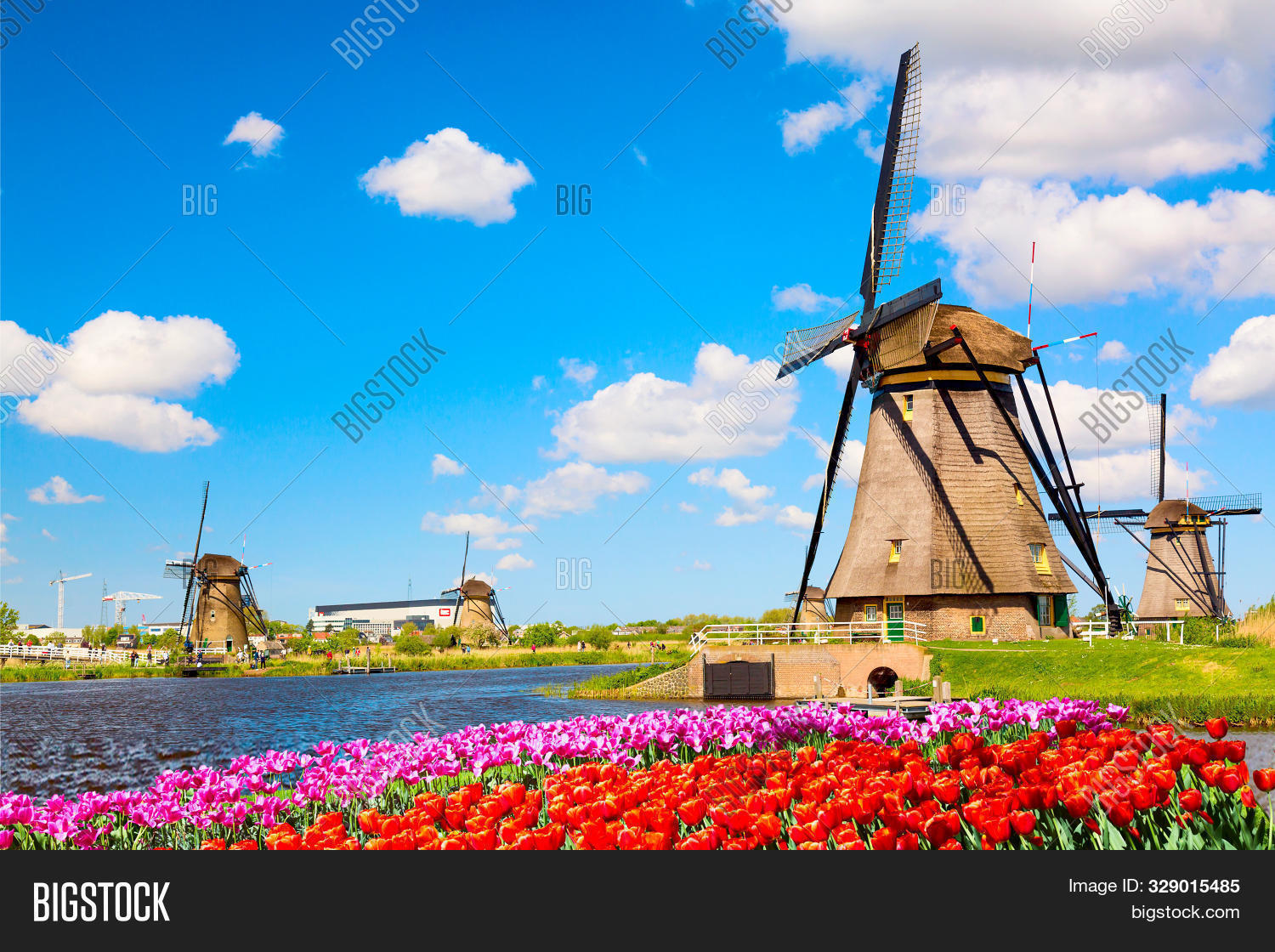 Colorful Spring Landscape In Netherlands, Europe. Famous Windmills In Kinderdijk Village With A Tuli