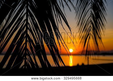 Amazing summer golden sunset over the bay of Roses, Catalunya, Spain. Palm branches and leaves on calm sea and the evening sky background. Colorful dramatic golden sunset through palm leaves stock photo