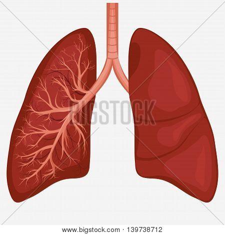 Human Lung anatomy diagram. Illness respiratory cancer graphics. Vector stock photo