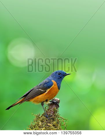 Blue-fronted Redstart (phoenicurus Frontalis) The Colorful Blue Bird With Orange Belly Perching On T-Dishwasher Magnet Skin (size 24x24)