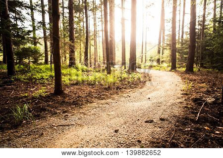 Hiking path and sunset in beautiful woods view inspirational summer landscape in forest. Walking footpath or biking path dirt road.