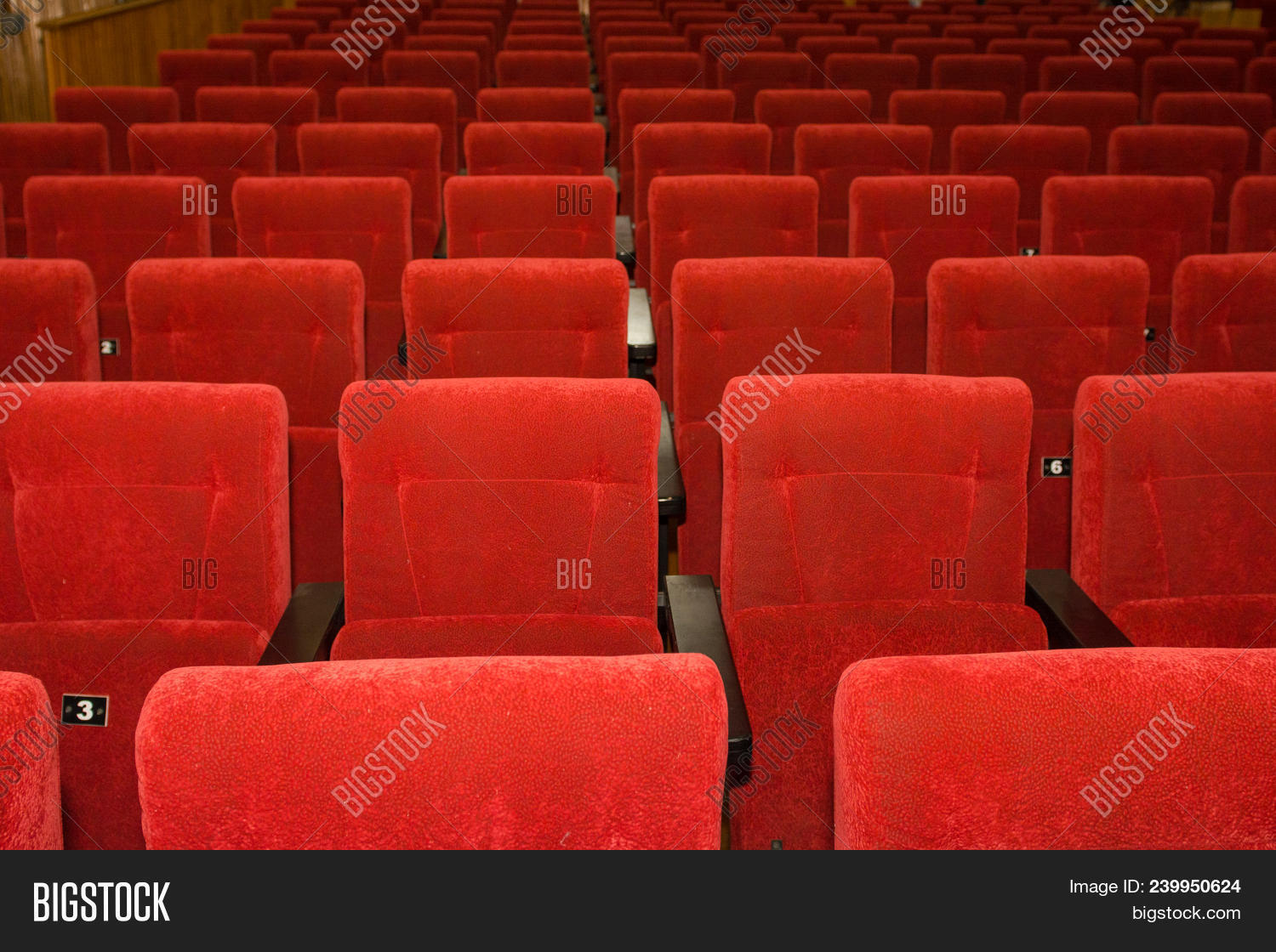 Seats In The Cinema Lots Of Seats In The Hall 239950624 Image Stock Photo