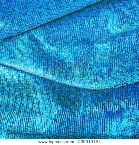 A bright blue opalescent fragment of a wing of the blue morpho butterfly, Morpho peleides. Cells, veins and scales of a butterfly wing are perfectly seen on the high magnification image. stock photo