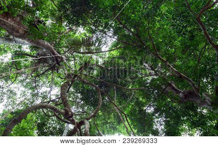 Lianas dangling and sunlight from the rainforest canopy in phuket thailand stock photo