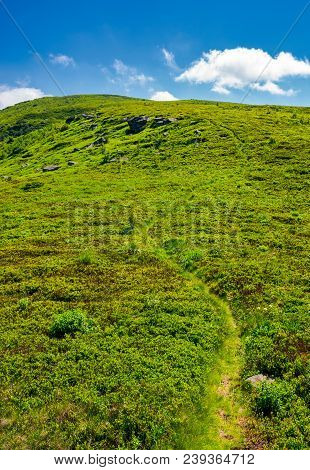 footpath through the grassy hills of the mountain. beautiful summer scenery in fine weather with some clouds on a blue sky stock photo