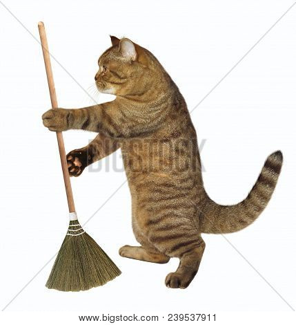 The cat holds a sweeping broom. White background. stock photo