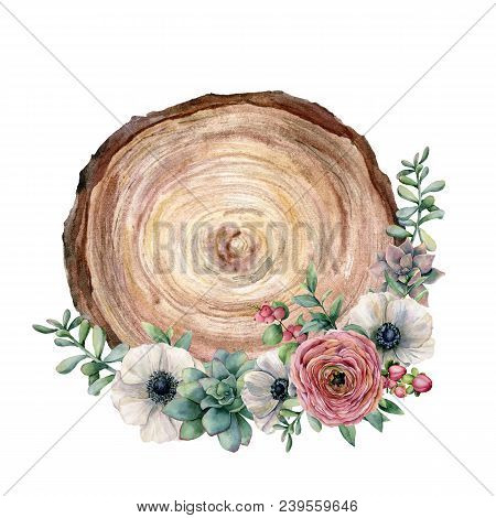 Watercolor cross section of a tree with flower bouquet. Hand painted anemone, ranunculus, eucaliptus leaves and succulent isolated on white background. Illustration for design, fabric or background stock photo