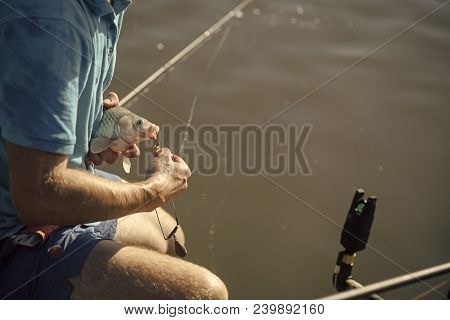 Carp, crucian carp, trout on fishhook, angling. Freshwater fish hooked on mouth in male hands, bait fishing. Bait, bait fishing, fish catching. Trophy, success achievement stock photo