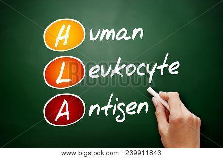 HLA - Human Leukocyte Antigen acronym, health concept on blackboard stock photo