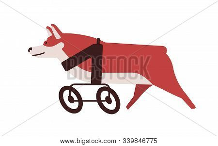 Dog with wheel chair flat vector illustration. Handicapped pet with animal wheelchair isolated on white background. Disabled puppy legs replaced with wheels. Active disabled pup. Injury adaptation. stock photo