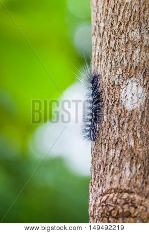 Woolly Bear Caterpillar on the tree with green bokeh stock photo