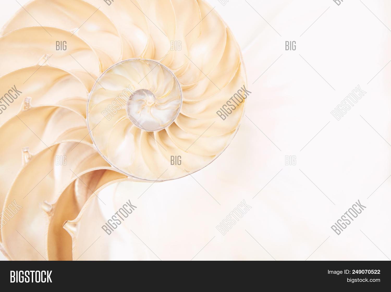 Chambered Nautilus Shell Photo Stock