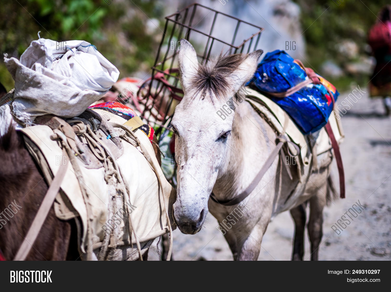adventure,animal,annapurna,asia,autumn,backpack,caravan,cargo,carriage,carry,countryside,domestic,donkey,footpath,gear,goods,great,group,hardtrail,head,high,hiking,himalaya,himalayan,hinny,horse,load,mammal,mountain,mule,nature,nepal,nepalese,nepali,overwork,pack,path,pathway,region,rural,step,string,track,trail,transport,transportation,trek,trekking,upland,walk
