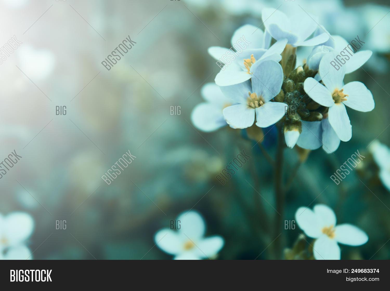 Botanical,alloy,artistic,background,beauty,border,botany,bouquet,bright,card,celebration,close-up,color,colorful,flower,lovely