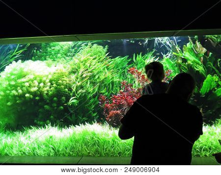 People Looking and Enjoying Strip of Beautiful Colorful Aquarium on a Black Background with Many Exotic Fish stock photo