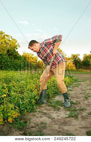 farming, gardening, agriculture and people concept - young man planting potatoes at garden or farm. The agriculture, plant, harvesting concepts stock photo