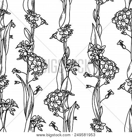 Forget-me-nots boundless background. Black linear tiny flowers and leaves on white background. Tileable design element. stock photo