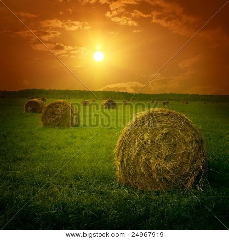 Field with hay bales at twilight. stock photo