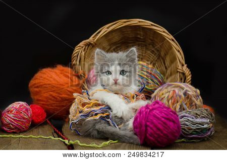 Little funny kitten with a ball of knitting. Cute fluffy cat is playing with ball of knitting. Cute kitten and ball of thread stock photo