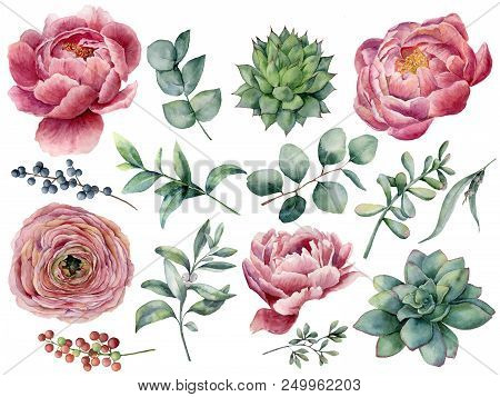 Watercolor peony, succulent and ranunculus floral set. Hand painted red and blue berry, eucalyptus leaves isolated on white background. Illustration for design, print stock photo