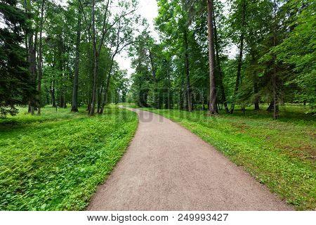 Winding Path through a tranquil verdant park with lawn and tall green trees in summer day for walking and relaxing and breathing clear air stock photo
