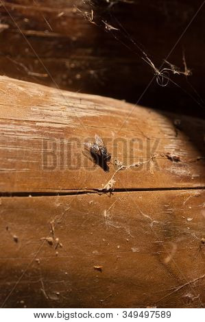 Close-up of a fly perched on a dirty old wood stock photo