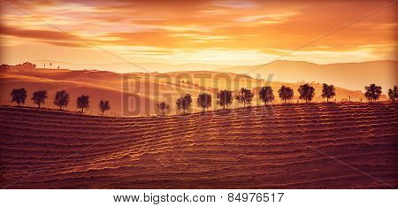 Beautiful countryside landscape, amazing orange sunset over golden soil hills, beauty of nature, agr
