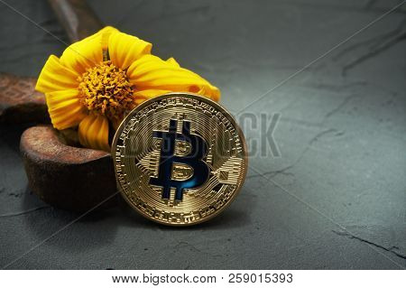 Close up of golden bitcoin rusty nippers and yellow flower withered. Cryptocurrency popularity and price decline conceptual image with copy space stock photo