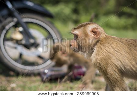Monkeys or macaque Stole and Drinking sweet water from a Plastic Bottle in Khao Yai National Park, Thailand stock photo
