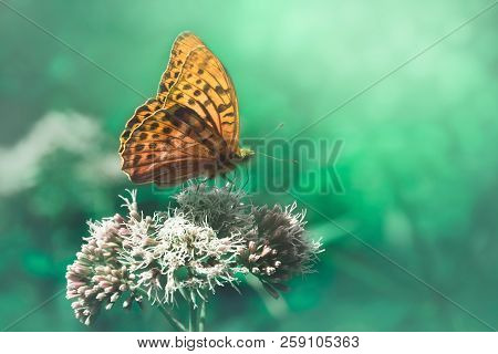 Nature Background Butterfly. Butterfly Insect In Nature. Nature Insect Butterfly On White Flower Pla
