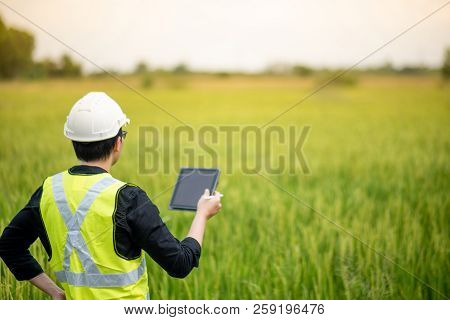 Young Asian male agronomist or agricultural engineer observing green rice field with digital tablet and pen for the agronomy research. Agriculture and technology concepts stock photo