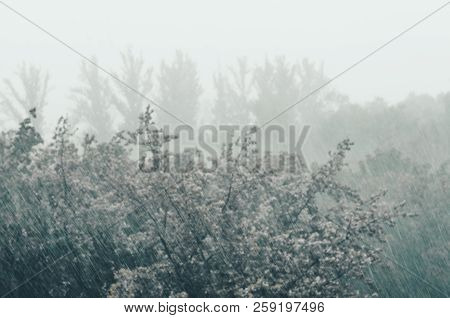 Landscape with trees in heavy summer rainstorm stock photo