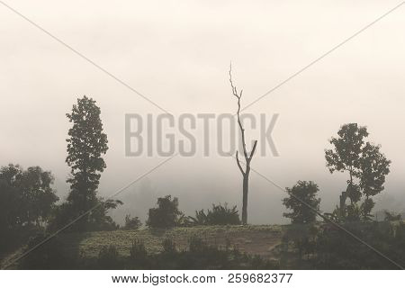 Dead tree in the mist in Northern Thailand, from Yun Lai Viewpoint Pai Thailand stock photo