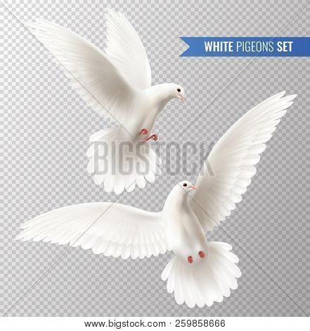 White Dove Transparent Set With Peace Symbols Realistic Isolated Vector Illustration