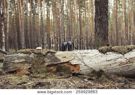 Headphones on a fallen tree with moss and mushrooms stock photo