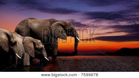 Fantaisie éléphant