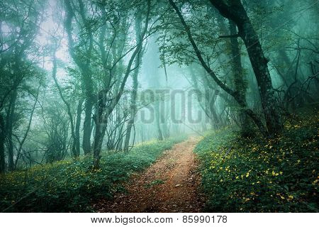 Road Through A Mysterious Dark Forest In Fog With Green Leaves And Yellow Flowers