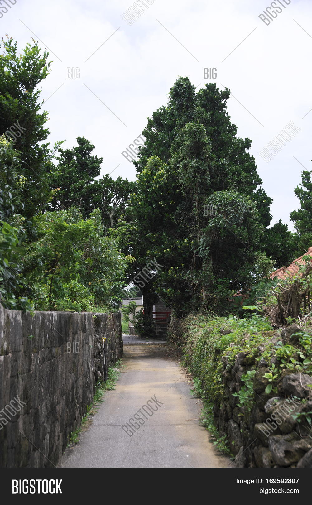 Road of residential area not paved on remote island of Okinawa
