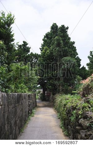 Road of residential area not paved on remote island of Okinawa stock photo