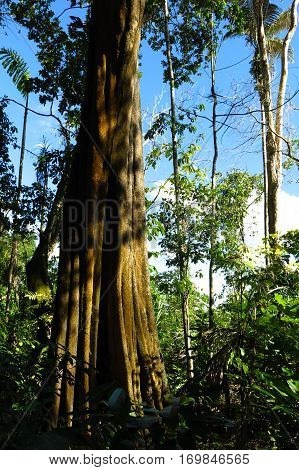 Image of Amazon forest in the Madidi National Park Bolivia Madidi National Park can be reached from Rurrenabaque if you cross the Beni River with the small passenger ferry. stock photo