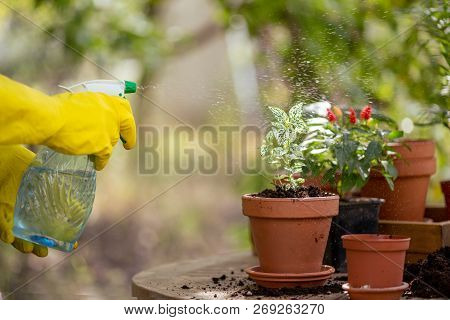 girl transplants flowers in the garden. flower pots and plants for transplanting stock photo