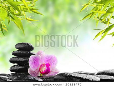 Spa concept zen pierres de basalte noir et des orchidée rose