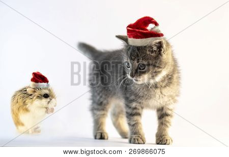 Hamster with Santa hat praying to the cute gray cat with Santa hat isolated on white background. This year whishes comes true text. stock photo