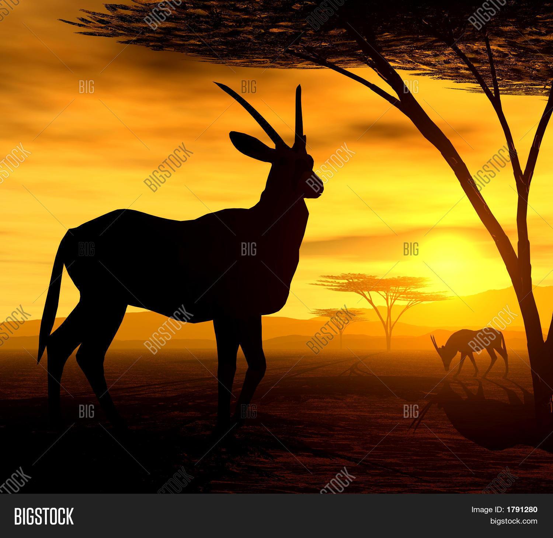 beautiful african sunset illustration of orxy antelopes