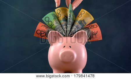 Pink Piggy bank money concept on dark blue background stuffed with Australian cash and female hand take one hundred dollar note. stock photo