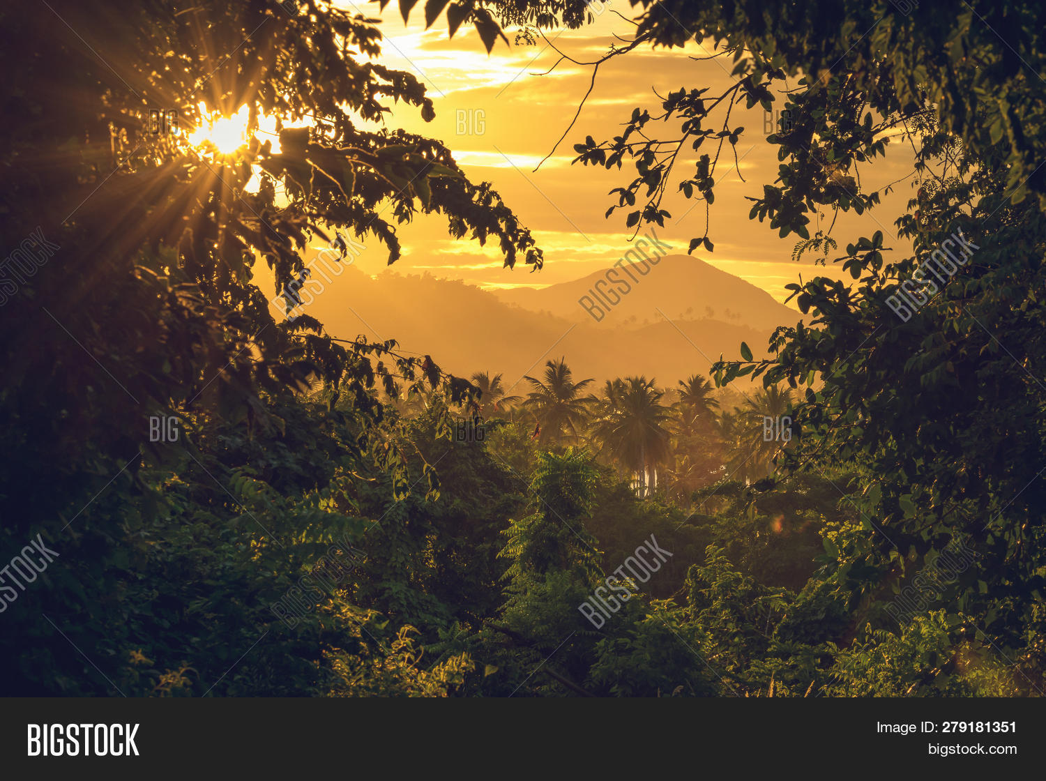 background,bright,climate,coconut,daylight,dominican,environment,flora,flow,foliage,forest,green,jungle,landscape,leaf,light,looking,lush,motion,mountain,natural,nature,outdoor,palm,path,peaceful,rainforest,republic,rock,rural,scenery,shine,stunning,sunset,tranquil,tranquility,travel,tree,tropical,tunnel,valley,vegetation,vibrant,view,vivid,walk,walkway,water,wild