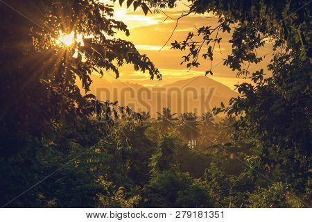Rainforest Jungle Nature Landscape. Sunset In Jungle Nature. Jungle View. Nature. Sunset In Nature.